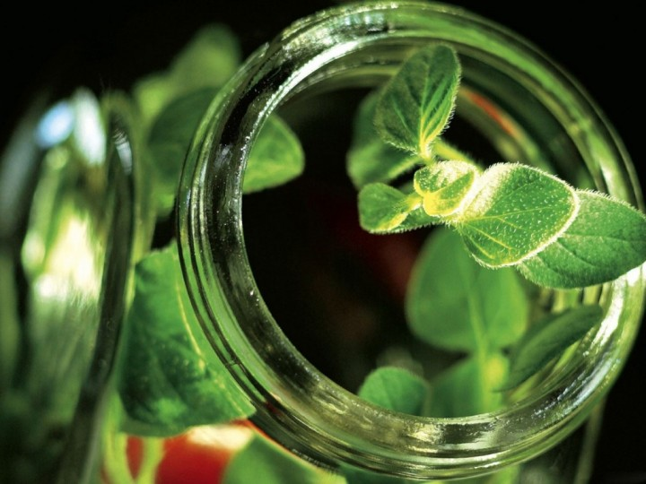 Фитотерапия, как альтернатива современным лекарствам (1)